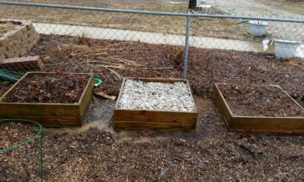 Undercover Gardening: Mulching with Shredded Paper